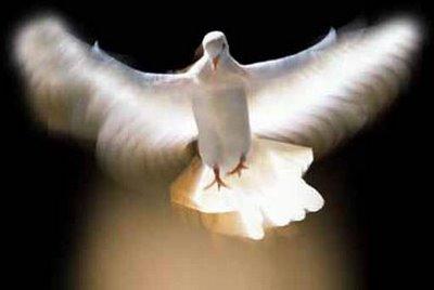 Pomba, um dos símbolos do Espírito Santo