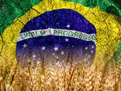 Bandeira do Brasil sobre sólido árido e campo de trigo